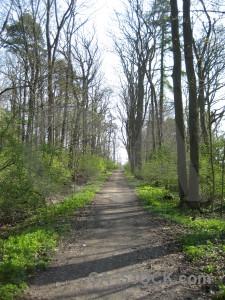 Path white tree green.