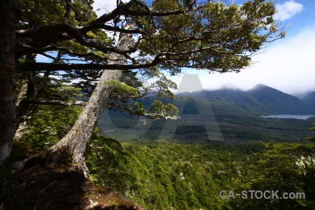 Pearl harbour circle trek forest new zealand sky manapouri.