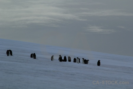 Penguin antarctica cruise bellingshausen sea sky south pole.
