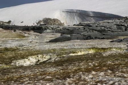 Penguin antarctica cruise petermann island wilhelm archipelago animal.