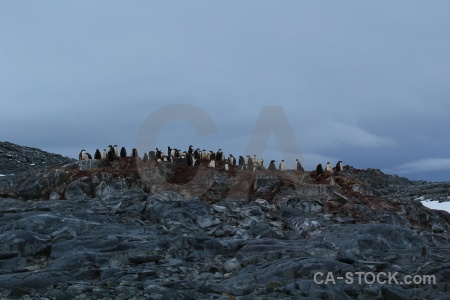 Penguin antarctica cruise rock dorian bay antarctic peninsula.