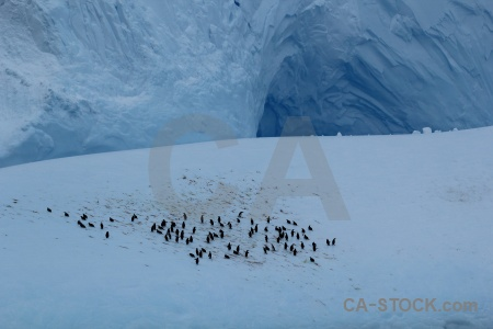 Penguin drake passage animal iceberg antarctica cruise.