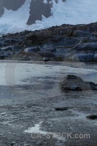Penguin rock antarctica gentoo chick.