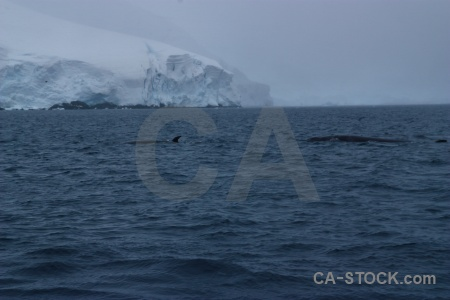 Penola strait animal day 9 antarctic peninsula ice.