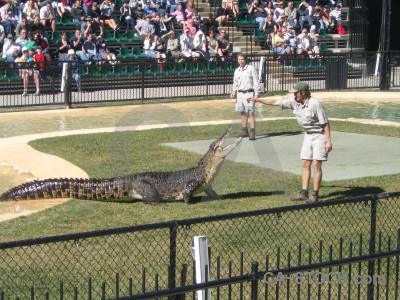 Person green reptile crocodile animal.