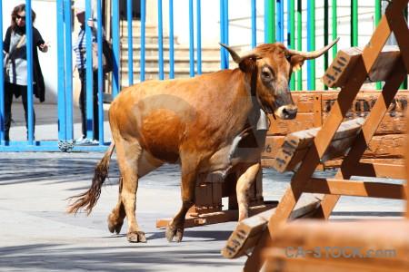 Person spain javea bull running horn.