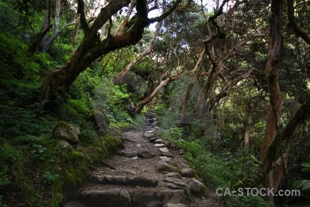 Peru altitude andes inca trail branch.