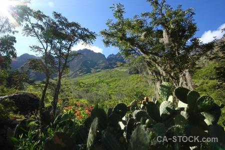 Peru altitude tree andes plant.