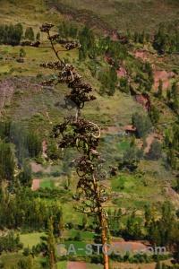 Peru grass inca sacred valley south america.