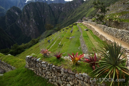 Peru inca trail altitude machu picchu grass.