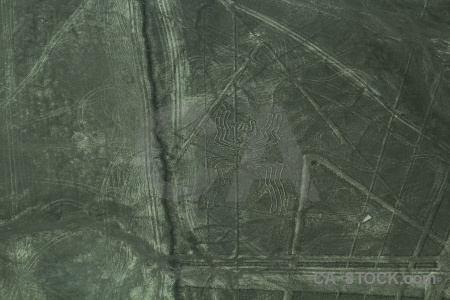 Peru insect south america geoglyph flying.