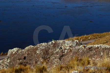Peru south america laguna lagunillas crucero alto bird.