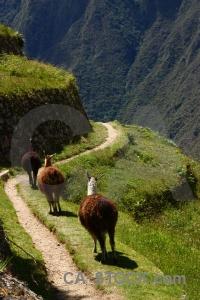 Peru yunkapata andes south america ruin.