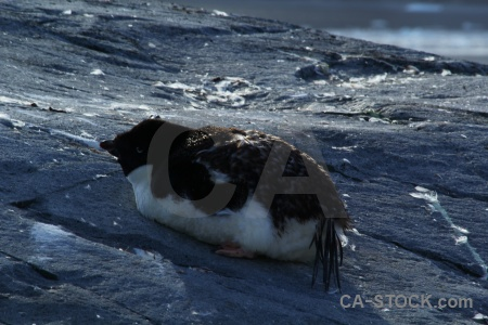 Petermann island antarctica cruise day 8 antarctic peninsula wilhelm archipelago.