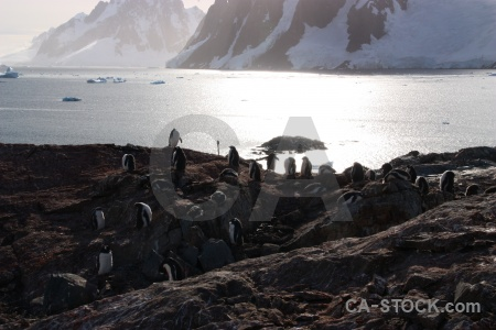 Petermann island mountain animal wilhelm archipelago ice.