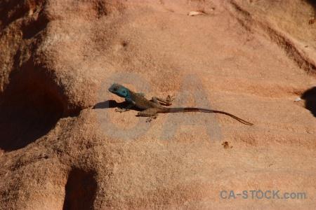 Petra animal jordan tail rock.