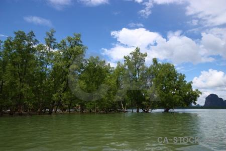 Phang nga bay cloud thailand tree sky.