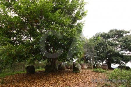 Phonsavan leaf fungus site 2 megalithic.
