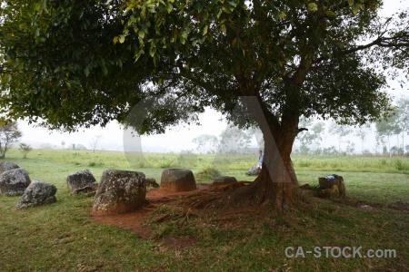 Phonsavan lichen southeast asia laos grass.