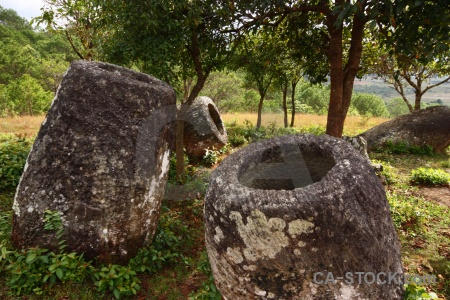 Phonsavan urn southeast asia tree plain of jars.