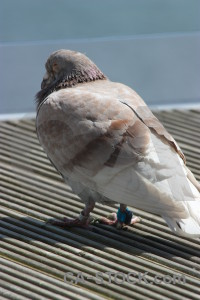 Pigeon animal bird dove.