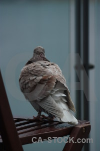 Pigeon animal dove bird.