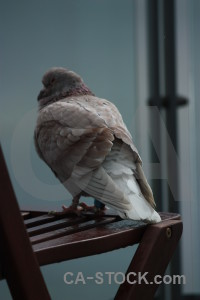Pigeon bird dove animal.