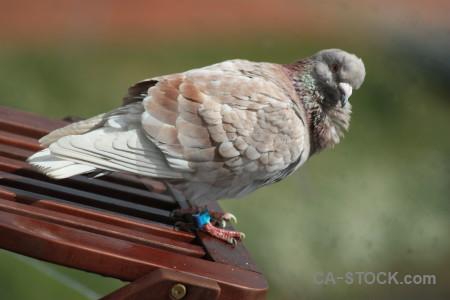 Pigeon bird green dove animal.