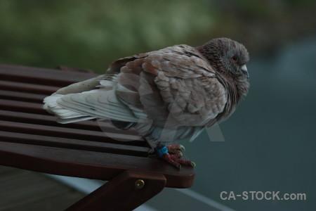 Pigeon green animal dove bird.