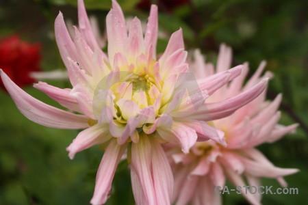 Pink flower green plant.