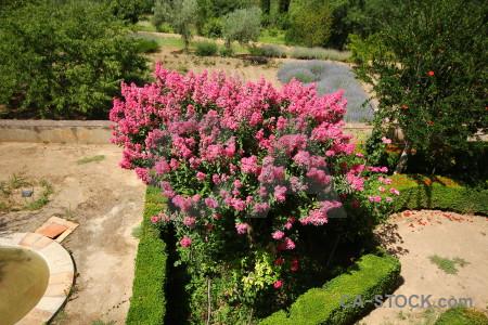 Pink palace granada garden red.