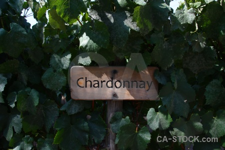 Pirque chardonnay winery south america vine.