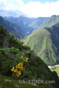 Plant andes inca trail cloud altitude.