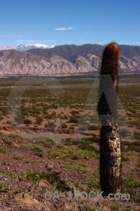 Plant argentina nevado de cachi south america salta tour 2.