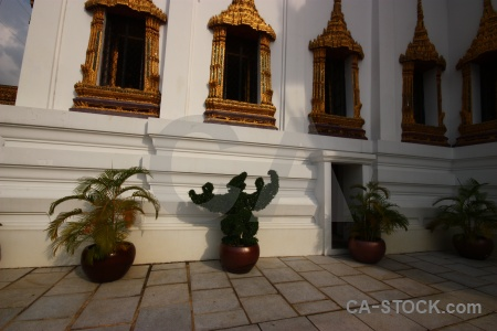 Plant buddhist gold thailand temple.
