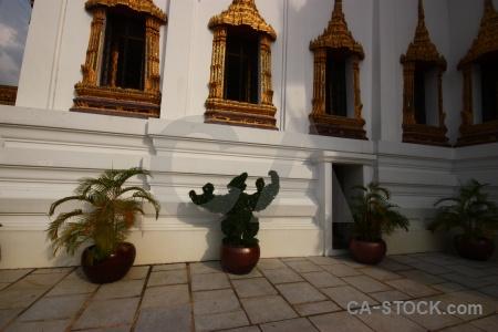 Plant buddhist gold thailand temple.
