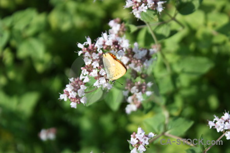 Plant butterfly animal flower insect.