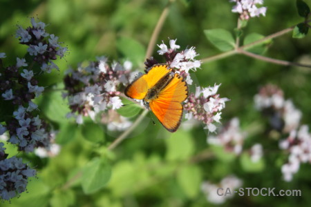 Plant butterfly flower insect animal.