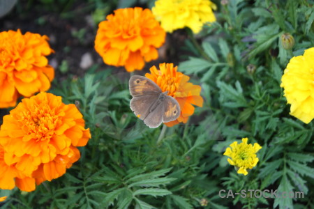 Plant butterfly insect flower animal.