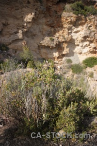 Plant cliff rock javea europe.