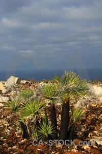 Plant europe javea spain.