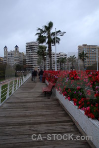 Plant europe spain flower valencia.