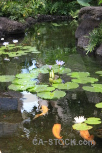 Plant fish green animal lily.