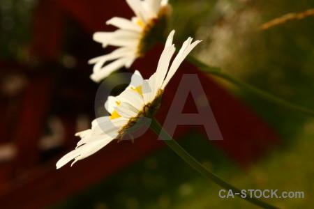 Plant flower.