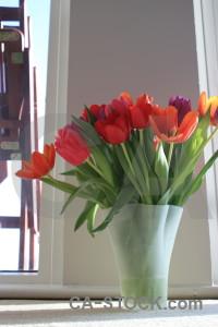 Plant flower bouquet vase tulip.