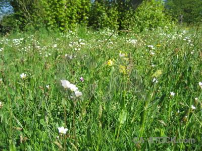 Plant flower field green.