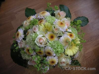 Plant flower green bouquet.