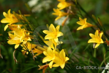 Plant flower green yellow.