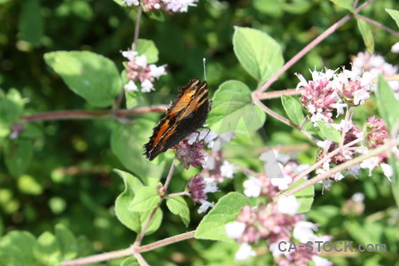 Plant flower insect butterfly animal.