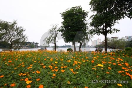 Plant flower lake tree building.